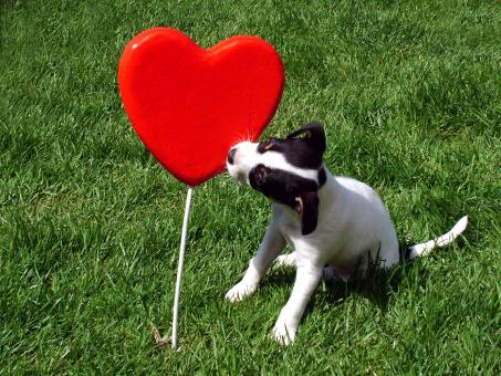 Puppy kissing a heart - Free Stock Photo