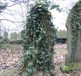 Free Photo - Grave Stone with Ivy Vine