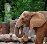 Free Photo - Elephant at the Zoo