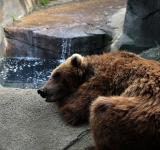Free Photo - Tired Bear