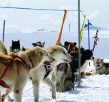 Free Photo - Huskies at mountain