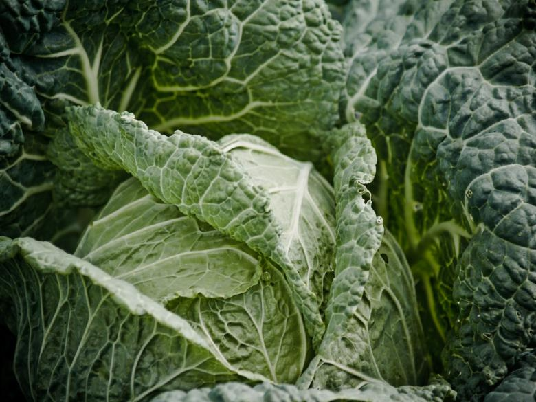Cabbage | Free Food Stock Photos