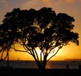 Free Photo - Pohutukawa Sunset