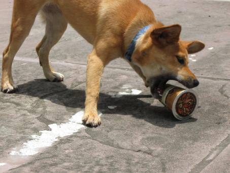 Dog Attacking Coffee Cup - Free Stock Photo