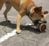 Free Photo - Dog Attacking Coffee Cup