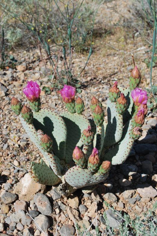 Free Stock Photo of Desert flower cactus Created by James Beattie