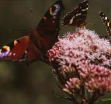 Free Photo - BUTTERFLY