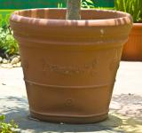 Free Photo - Flower Pot