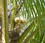 Free Photo - Cocunut Tree