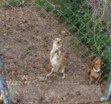 Free Photo - Barking dogs