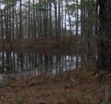 Free Photo - Country pond