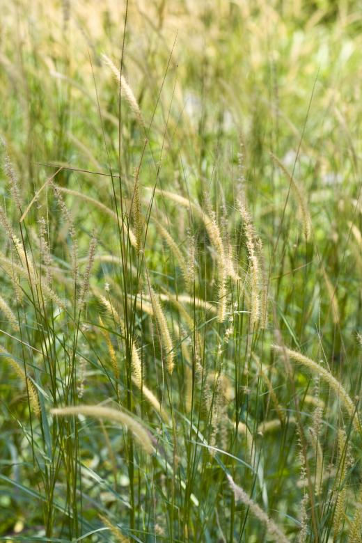 Free Stock Photo of Green Grass Created by linno1234