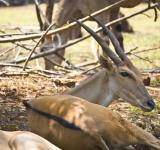 Free Photo - Deer Buck