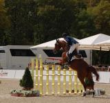 Free Photo - Equestrian