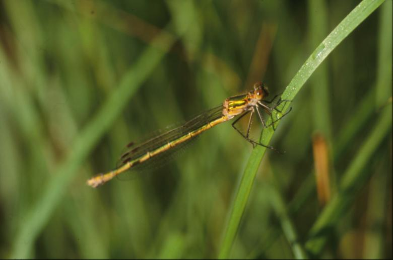 Free stock image of DRAGONFLY created by MUNCH PIERRE