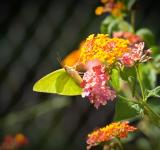 Free Photo - Butterflies and Flowers