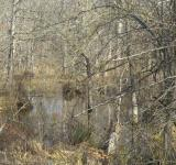 Free Photo - Country swamp