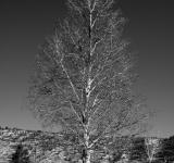 Free Photo - Winter Tree