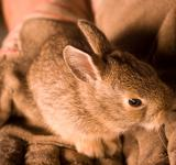 Free Photo - Little bunny in hands