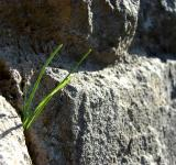 Free Photo - Grass between Rocks