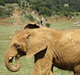 Free Photo - Elephant at Cabarceno ZOO, Spain