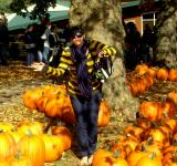 Free Photo - Fun in the Pumkin Patch
