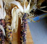 Free Photo - Dried Corn Husk
