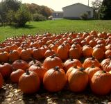 Free Photo - Pumpkin Row