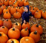 Free Photo - Little Boy in a Pumpkin Patch