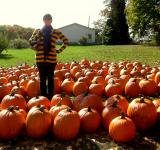 Free Photo - Pumpkin Field