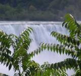 Canada - Niagara Falls - Water - Trees - Free Stock Photo