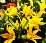Free Photo - Yellow flowers