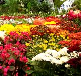 Free Photo - Bed of flowers