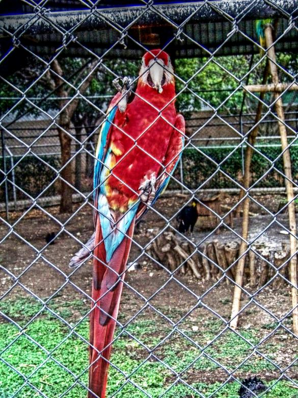 Free Stock Photo of Zoo parrot Created by homero chapa