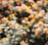 Free Photo - Out of focus flowers