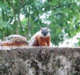 Free Photo - Squirrel