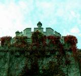 Free Photo - Ivy covered castle wall