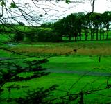 Free Photo - Irish golf course