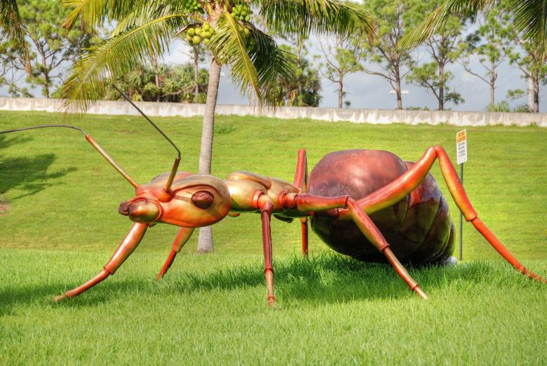 Free Stock Photo of Giant Ant, West Palm Beach, Florida, Jan Created by Giovanni Gagliardi