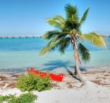 Free Photo - In the middle of the Keys, Florida, Janu