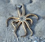 Free Photo - Starfish trapped on the sand, Florida, J