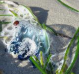 Free Photo - Jellyfish in Key West, Florida