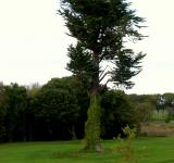 Free Photo - Ireland - Solemn Tree