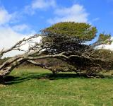 Free Photo - Windblown