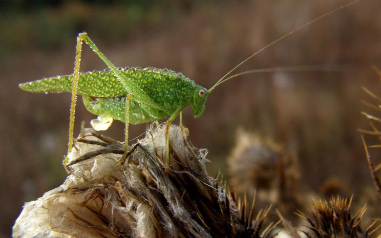 Free Stock Photo of Green Locust Created by Cofaru Alexandru