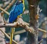 Free Photo - Blue and yellow Parakeet