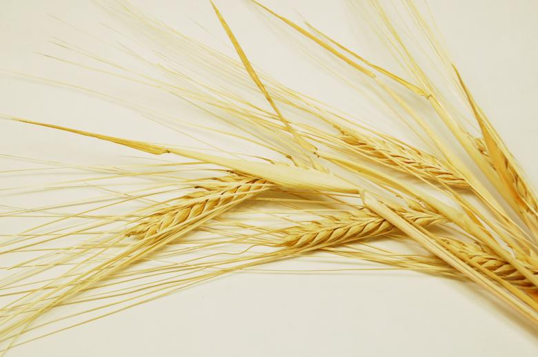 Free Stock Photo of Grain Created by Cofaru Alexandru