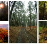 Free Photo - Forest collage