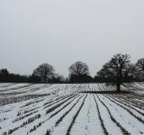 Free Photo - Winter fields