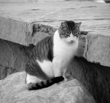 Free Photo - Mujesan cat